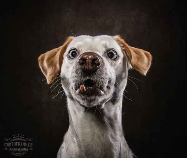 Biscuit Catcher - Hundeshooting inkl. Leinwanddruck